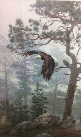 Daniel Smith  - Shrouded Forest  Bald Eagle s_n 6 of 950